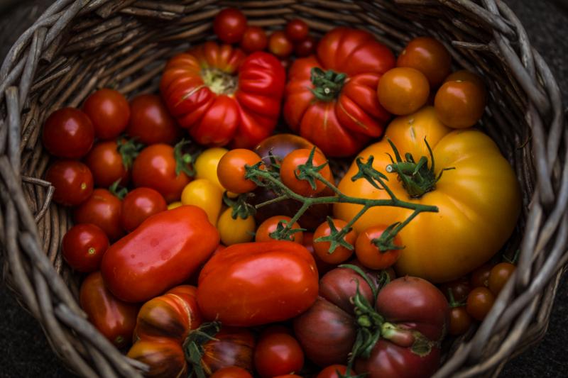 07112021_Tomatoes-12